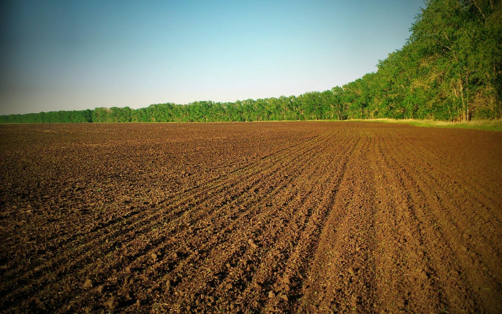 Как оформить земельный пай в собственность и особенности приобретения земли